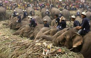 Thai elephant day pics