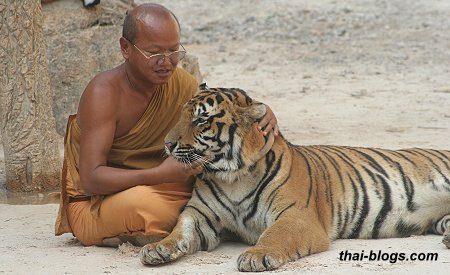 A monk with the tiger