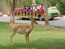 Khao Khiao Open Zoo