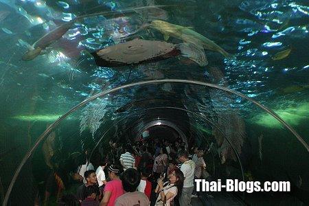 Aquarium and Crocodile Farm in Nakhon Sawan  Thai Blogs